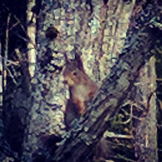 #squirrel annoyed by my disturbance