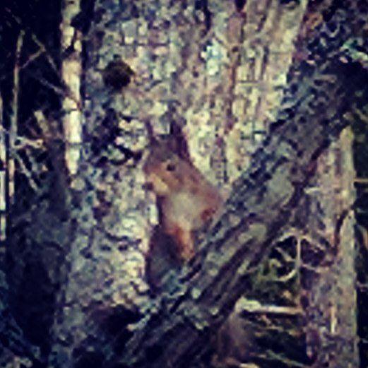 #squirrel annoyed by my disturbance