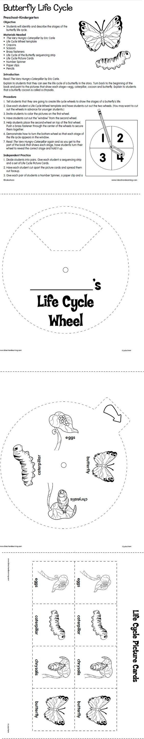 worksheet Silkworm Life Cycle Worksheet 661 best life cycle images on pinterest cycles preschool and free butterfly lesson homeschool giveaways