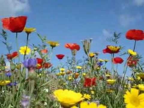 Johnny Mathis - Wonderful Wonderful    Desperate housewives final bölümünde çalarak kalbimi fet eden şarkıdır.