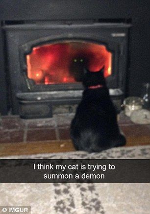 'I think my cat is trying to summon a demon'...