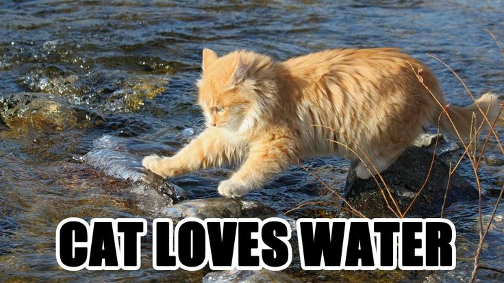 Funny cat : Cat Loves Water