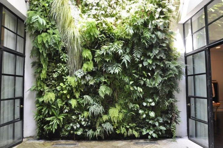 mur végétal extérieur en plusieurs espèces de palntes
