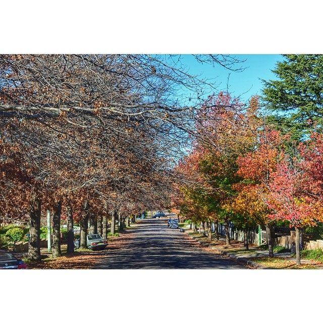 Autumn in Goulburn is spesh.