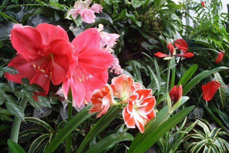 Takie obrazy - ZIMĄ - w gliwickiej Palmiarni #gliwice #palmiarnia