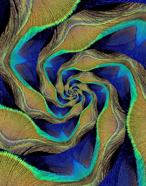 Peacock by Bill Brown, via Flickr