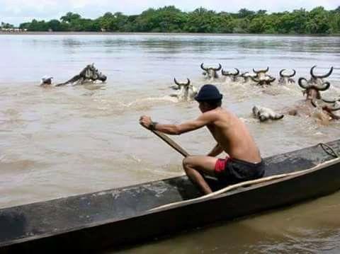 río pauto  casanare..colombia..