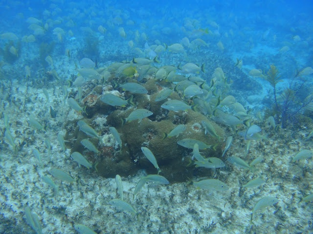 Bahamas Teen Expedition Blog Programs 46