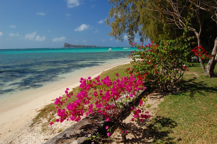 Tropical Island Flowers: Beautiful Exotic Beach With Tropical Flowers On Mauritius