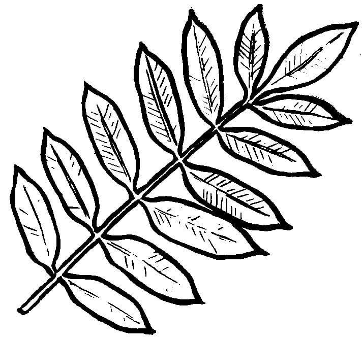 осенние листья шаблон
