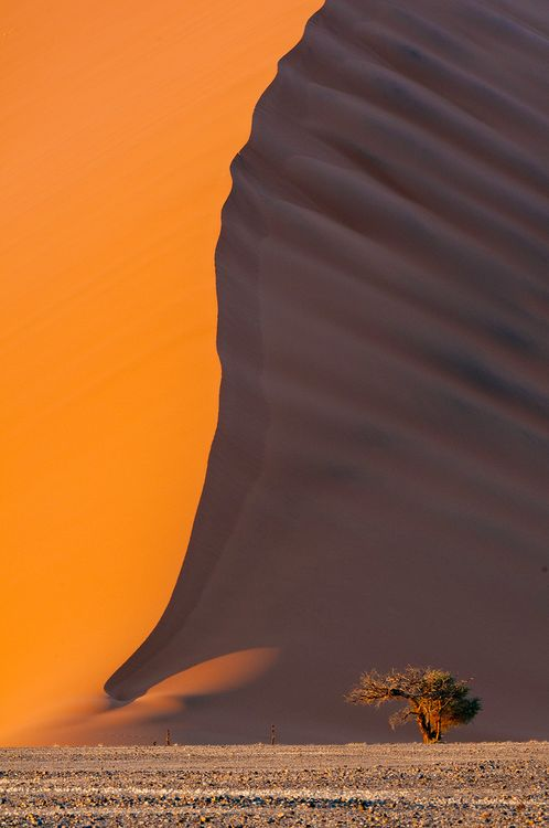 Photo of the Day: Lone Acacia, Sossusvlei Sand Dunes Photo by Bob Bush (Altadena, California); Nambia
