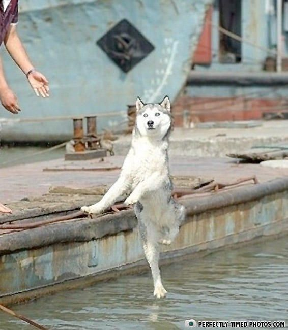 Best Animals Images On Pinterest Dogs Animal Memes And Cats - 25 perfectly timed animal photographs