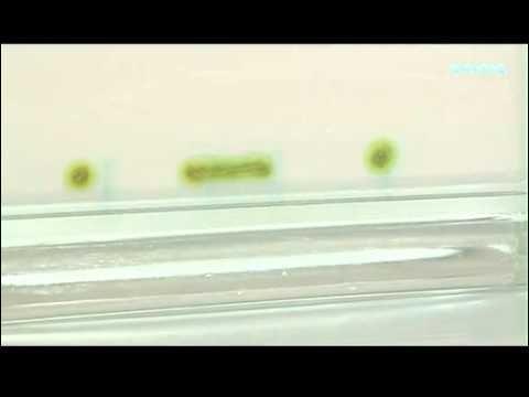 La cromatografía (I): cromatografía en capa fina