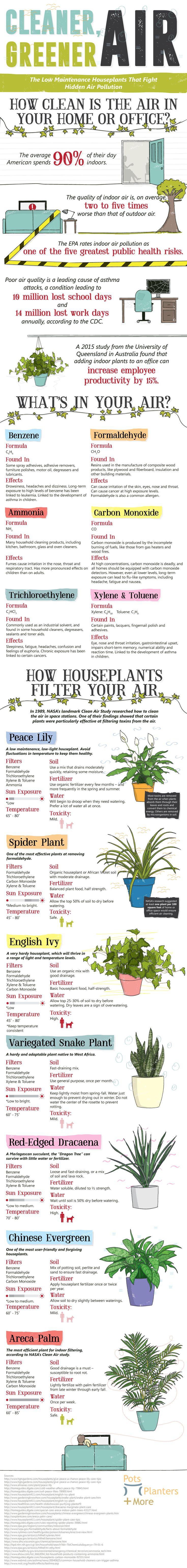 Best 25 low maintenance plants ideas on pinterest for Pollution fighting plants