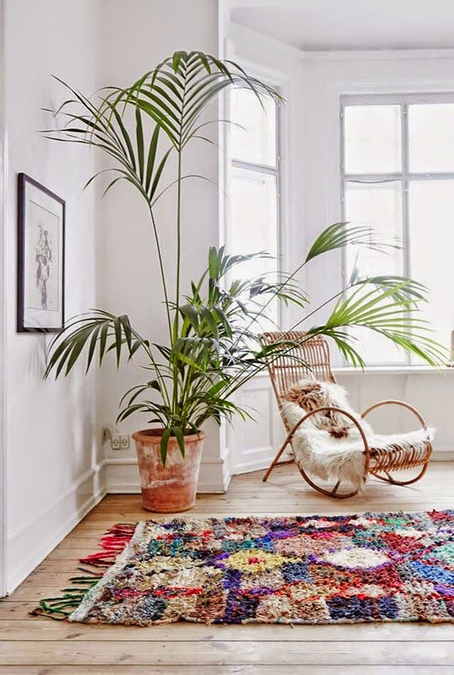 Scrolled Cane chair, sheepskin throw, large tropical plant, vibrant shaggy rug, boho vibes