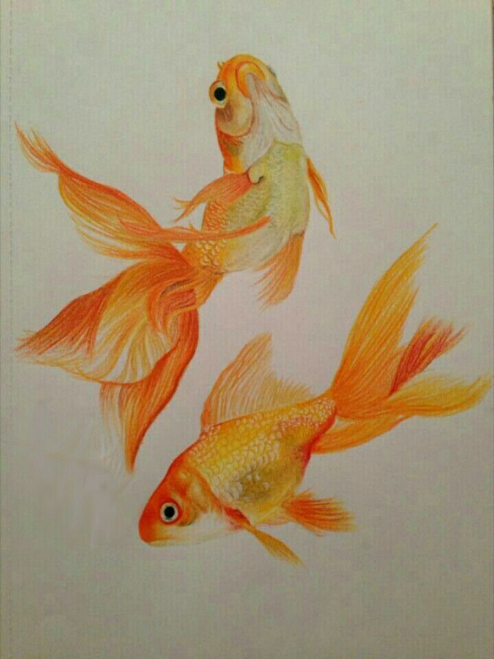 Best 25 fish drawings ideas on pinterest fish art fish for Fish scenery drawing