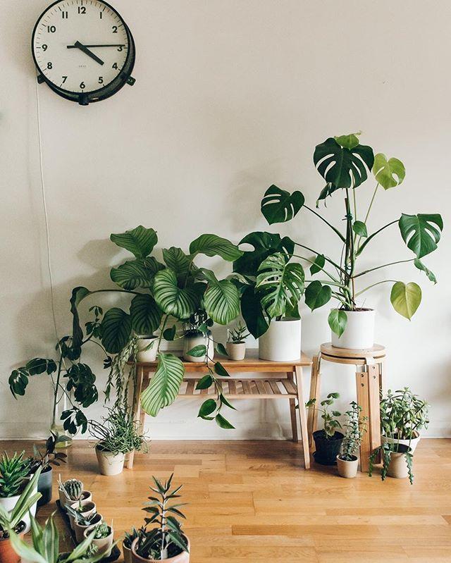 52 Hübsche Indoor Gardening Decor Ideen