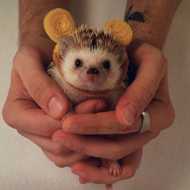 Roar, I'm a Hedgebear