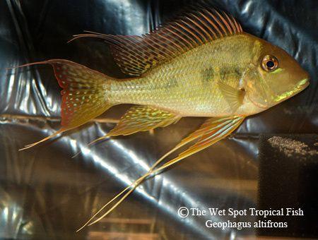 44 Best Diy Aquarium Stand Images On Pinterest Fish