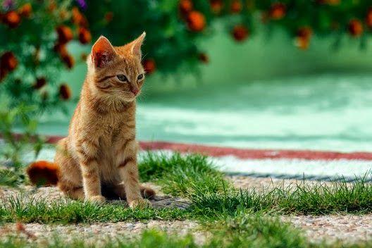 Czy koty myślą?
