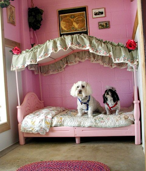 12 best posh pet rooms images on pinterest pet rooms for Dog themed bedroom ideas