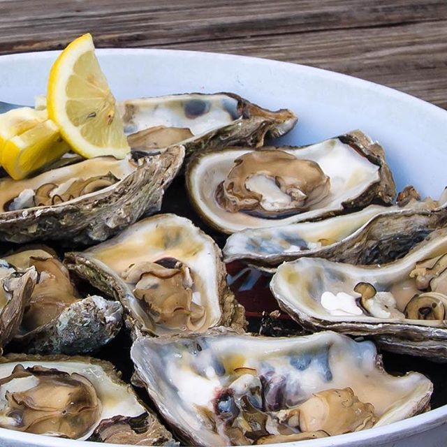 Dirty Martini Oyster Shooters - Oyster Obsession™