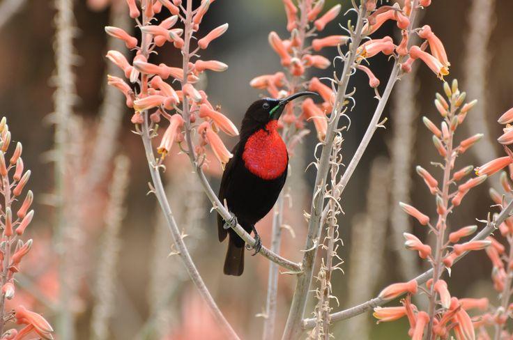 I Love Kruger Park | Wildlife Photography