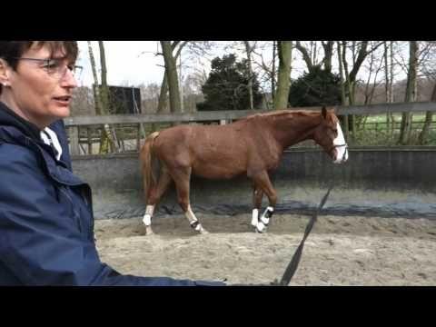 Hoe begin je met een jong paard met longeren? Hoe leer je dat en waar begin je? En Petra rijdt met Press bitloos. Hoe rijd je dan naar 'het bit'?'.