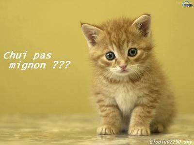 blog.fille.com/blog_article/Chatons-trop-trop-mignon3.jpg