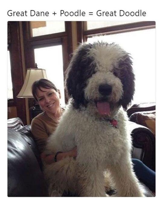 15 herzerwärmende Momente: Warum jeder einen riesigen Hund in seinem Leben haben sollte   – Dogs