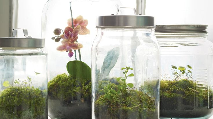 Even if you don't have much of a green thumb, terrariums act as small…