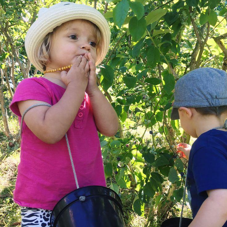 Cueillette de myrtille avec les enfants à cambo les bains au domaine Xixtaberri - pays basque