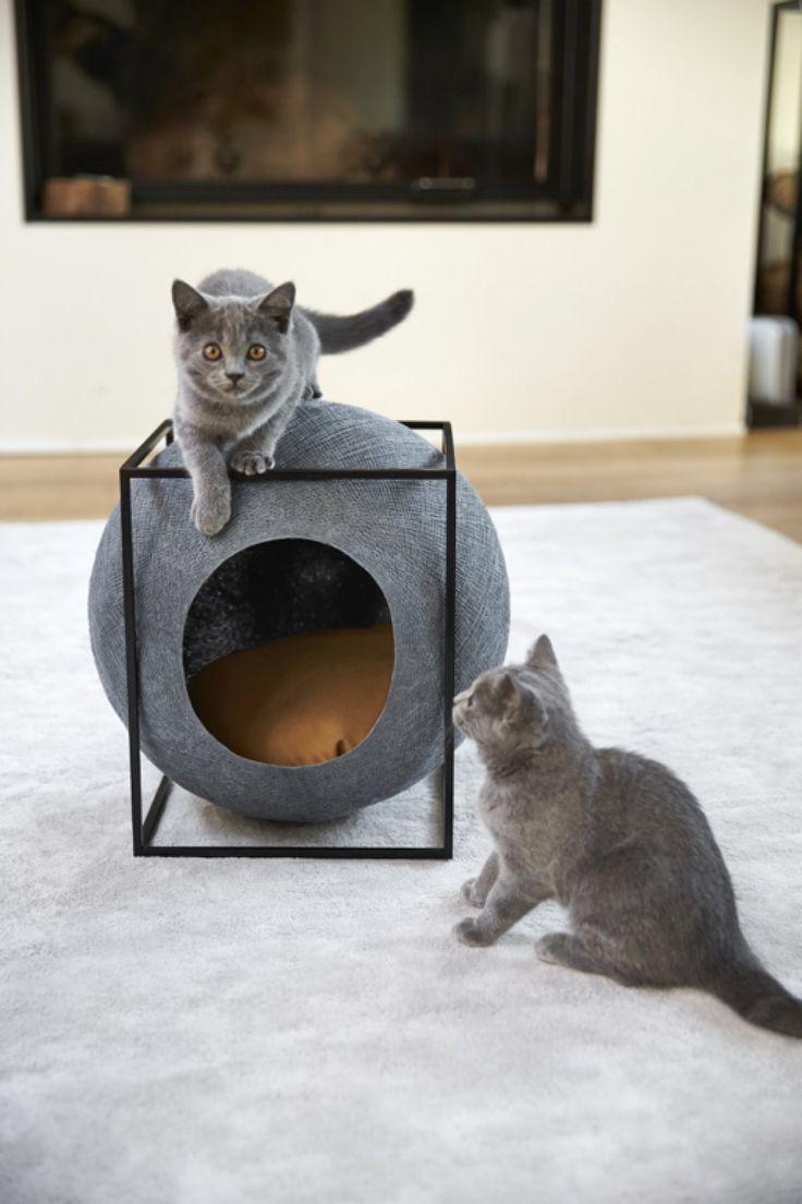 Meyou: Ένα σπίτι για αριστοκρατικές γάτες