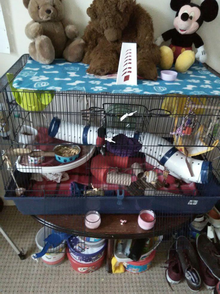 My rat cage