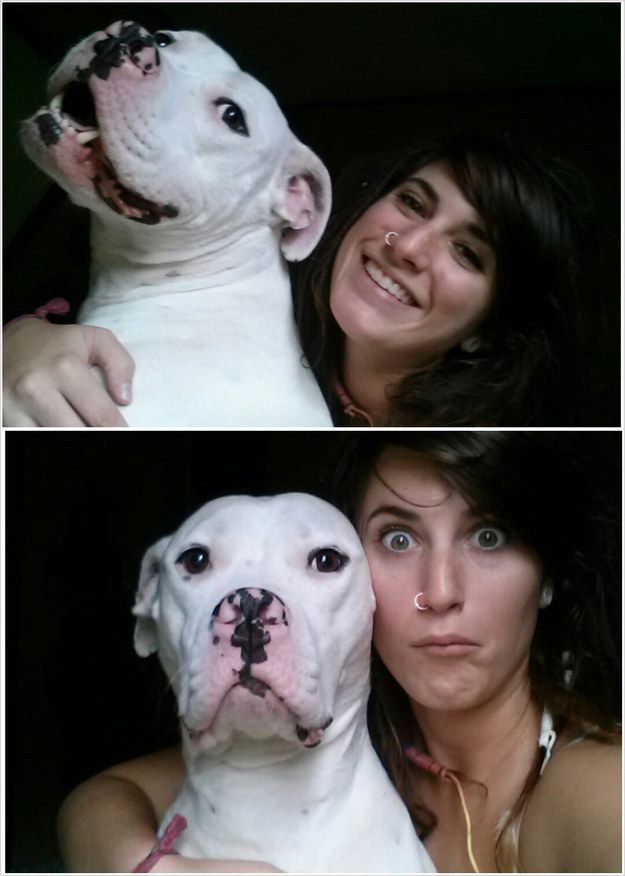 Yerim be ^^ They never take themselves seriously: | 24 Reasons Why No One Should Ever Have A Pitbull