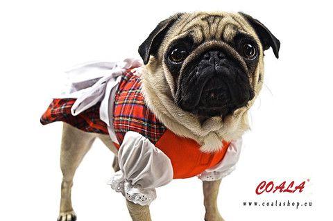 #Hundedirndl Bella, #Dogdirndl, Hundedirndl für Oktoberfest Outfit günstig @Coalashop