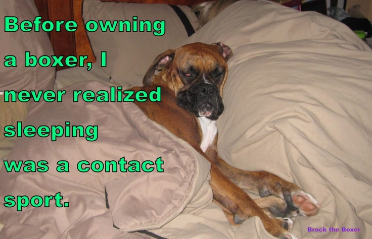 Before owning a boxer, I never realized sleeping was a contact sport.