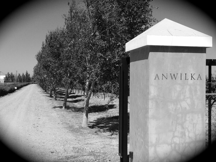 Anwilka in Stellenbosch #anwilka #stellenbosch #wine
