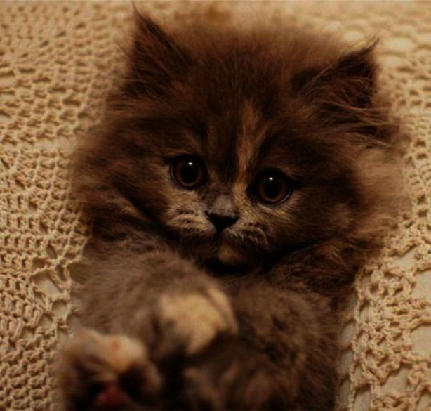 Peekaboo Raccoon With Images Kittens Cutest Cute Animals