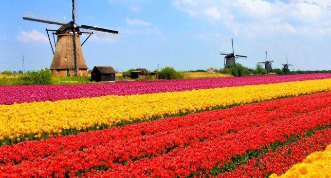 4 Passeios em Redor de Amesterdão