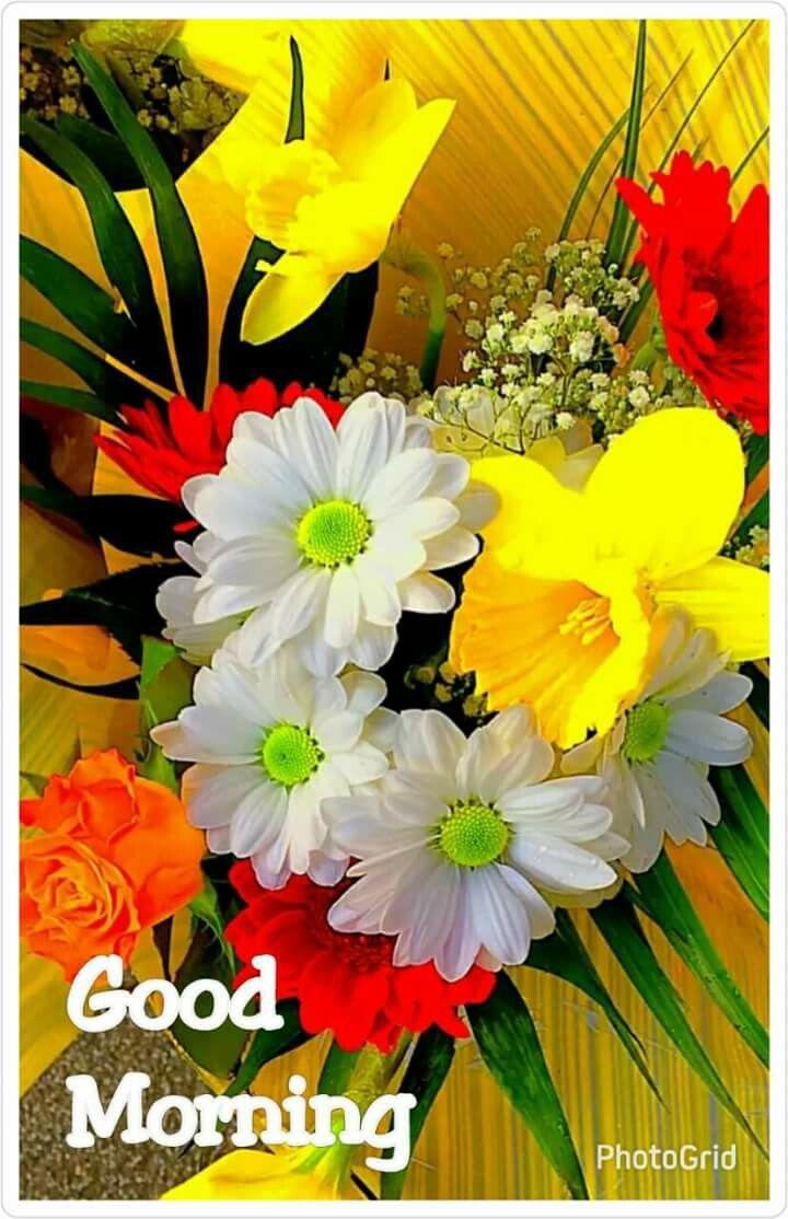 Good Morning Good Morning Beautiful Flowers Good Morning Flowers Good Morning Beautiful Pictures