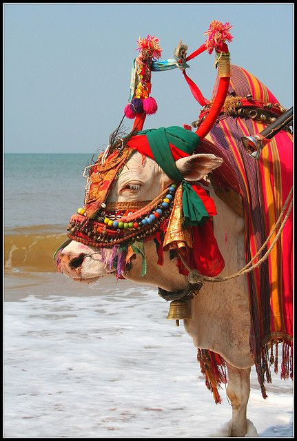 Overdressed for the Beach - Goa , India