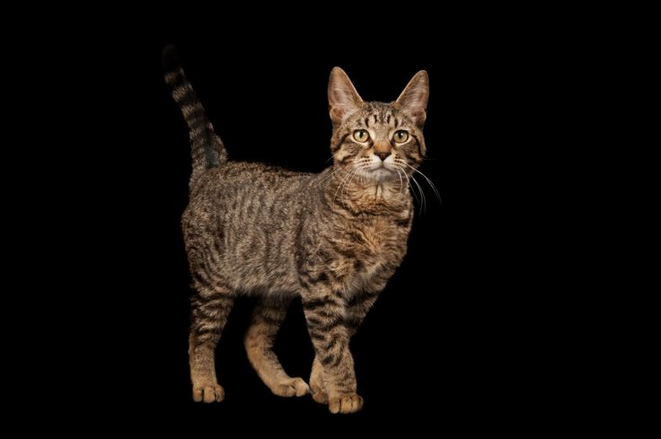 A comprehensive survey of cat genes suggests that even after felines wandered into our lives, they remained largely unchanged for thousands of years.