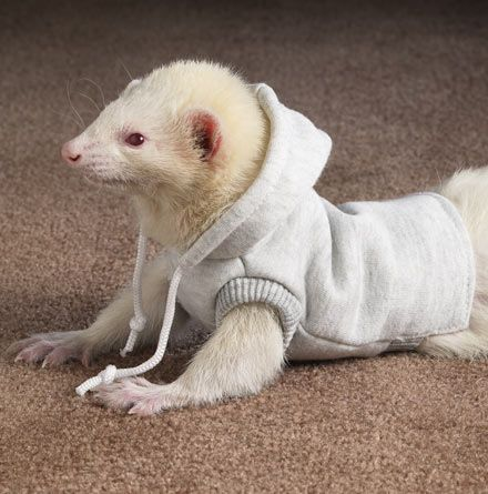 Ferret hoodie- because..how are these guys not freaking adorable?