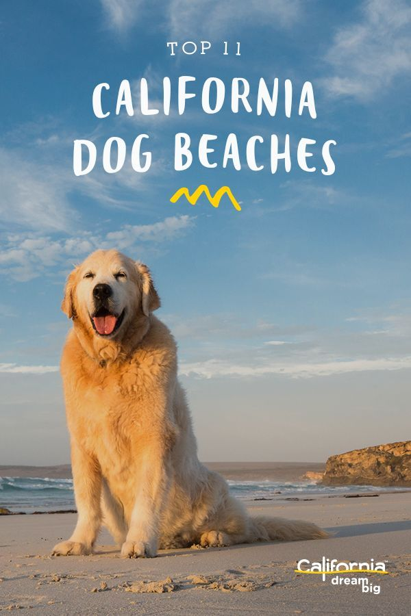 11 Great Dog Friendly Beaches In California Dog Friendly Beach California Dog Dog Beach