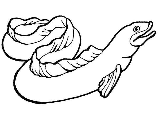 Sea Animals, : Moray Eel slippery Sea Animals Coloring