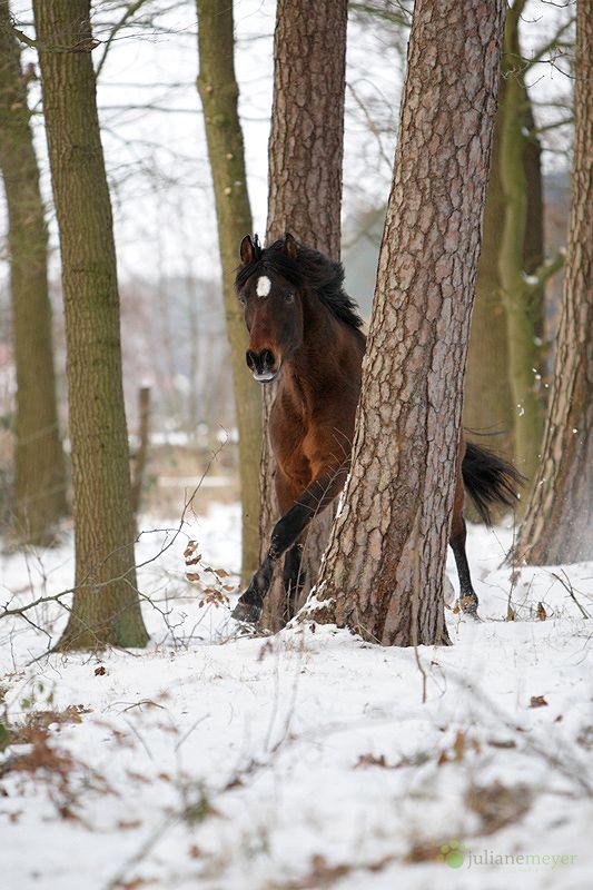 horse /  Juliane Meyer