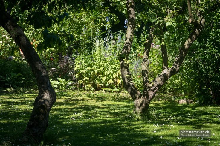 Old apple trees and great borders
