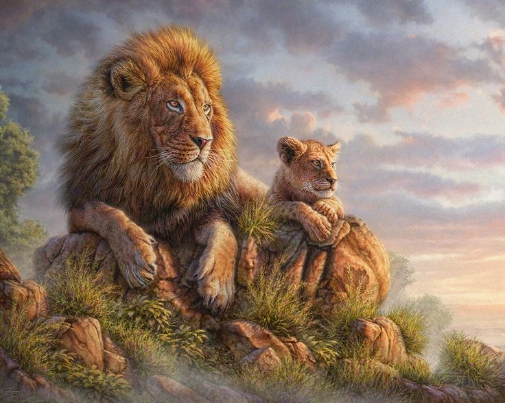 Lion Pride By Phil Jaeger Nature 2d Cgsociety