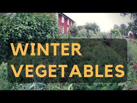 Följ arbetet i Skillnadens Trädgård under hela året och få tips och idéer till hur du kan odla grönsaker i din egen trädgård. Prenumerera på min kanal och se...